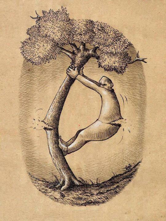 árvore Ong meio ambiente Amazônia