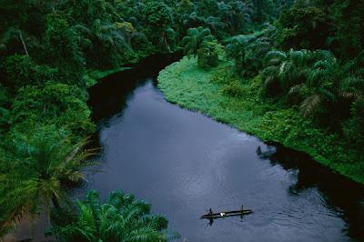 Cabinda. Floresta do Maiombe