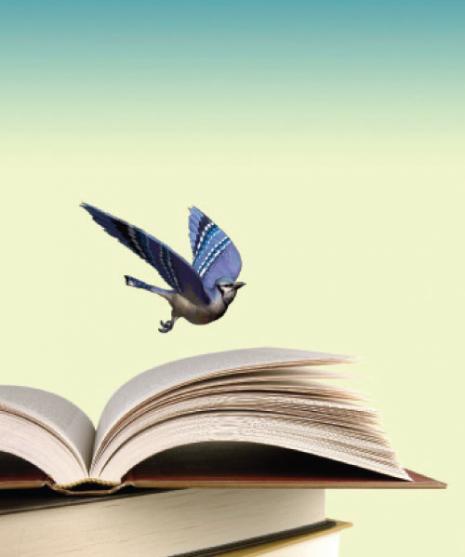 livro pássaro