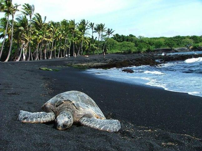 11 – Punaluu Black Sand Beach, Havaí