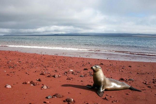 A areia vermelha na Rábida foi formada devido à oxidação dos depósitos de lava ricos em ferro, embora possa também ser devido a sedimentos de corais.