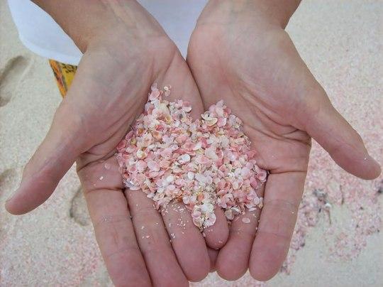 A terna areia rosada das Bahamas é pigmentada por restos de corais, fragmentados pela arrebentação das ondas.