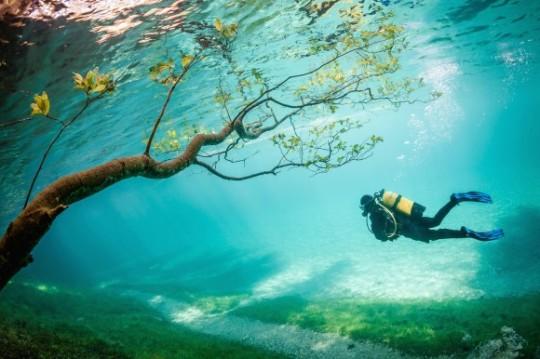 """Ganadora del tercer lugar – """" Buzo en Magic Kingdom """" de Marc Henauer. El Lago Verde (Grüner See) se encuentra Tragöss , Austria . En la primavera , el deshielo eleva el nivel del lago de unos 10 metros . Este fenómeno dura sólo unas pocas semanas, que cubre las rutas de senderismo, praderas y árboles"""
