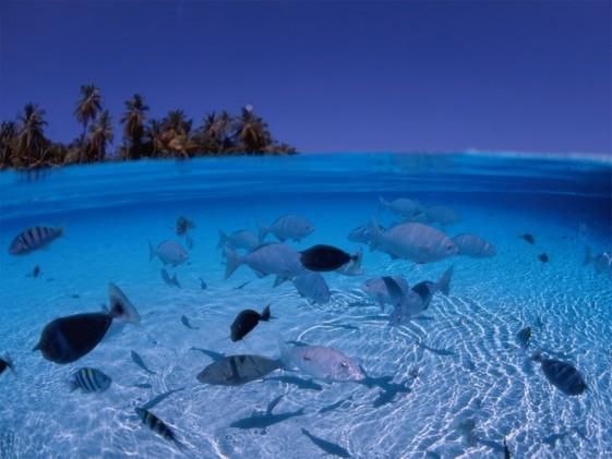 Costa de Ningaloo, Australia. Lugar de concentración de tiburones ballena y otras especies marinas